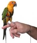 Kšandy pro papoušky XXS - XXL