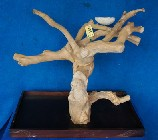 Reptile Java Wood Tree